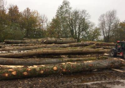 Le bois pour votre meuble sur-mesure est issu de forêts durablement gérées.
